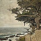 Coastal Cypress by Colleen Farrell