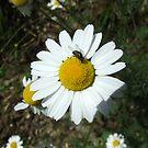 Flower by Freek Monteban