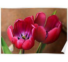 Pink Tulip Pair Poster