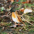 Squirrelrobin by Nathan Walker