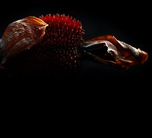 Canna Seed Pod by micklyn