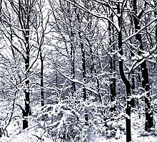 Snow Covered Trees by Nigel Bangert