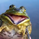 Screaming Bullfrog by Dandelion Dilluvio