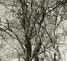 Plane trees by Martine Affre Eisenlohr