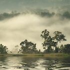 "'Water,Gums & Mist"" by debsphotos"