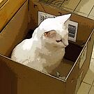 Box Duty by hickerson