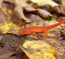 Red Eft by Dandelion Dilluvio