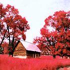 Tabiona barn by Douglas Barnes