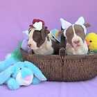 Easter Puppies by Ginny York