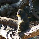 Lonesome Mandrill by heyitsmefi