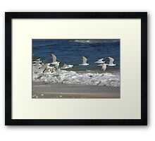 Terns in Flight Framed Print