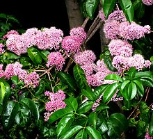 Pink flowers on a tree branch. by Marilyn Baldey