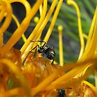 Ants up close by Dave Storey