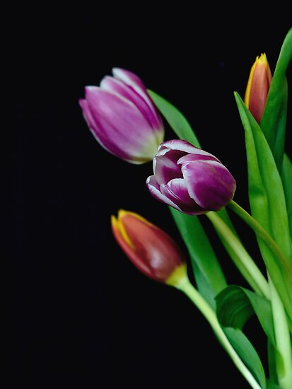 Spring Blooms by Myron Watamaniuk