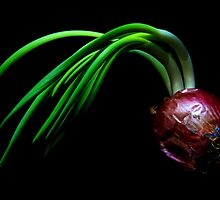 Oh! Onion by jerry  alcantara