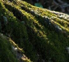 Moss - natural light by solareclips~Julie  Alexander