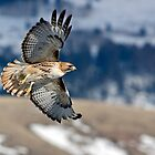 Red-Tailed Hawk Banking Away by A.M. Ruttle