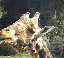 GIRAFFEE by gracestout2007