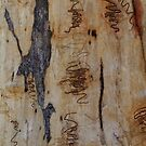 Scribbly Gum 6 by Martin How