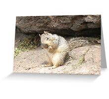 Shy Rock Squirrel  Greeting Card