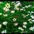 my garden 8 by Colleen Milburn