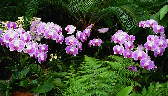 Purple Orchids 'n Fern by Margie Avellino