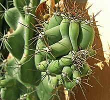 Cactus Close-up 3 by Christopher Johnson