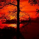 sunsetting behind an old leafless oaktree by kellimays
