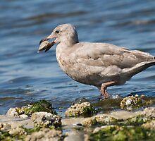 Clam seagull by genielamb