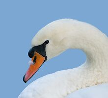 Swan Portrait by genielamb
