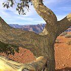 Dancing Tree by Tamas Bakos
