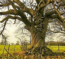 TREE -  EARSHAM, NORFOLK by ANNETTE HAGGER