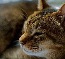 My Cat Noah...RIP by dazzleng