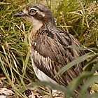 Bush Thick Knee by Leanne Nelson
