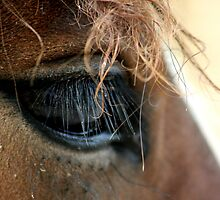 Shire Horse Eye by AnnDixon
