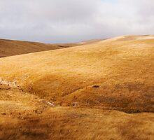 Kilcunda Hills  by James  Archibald