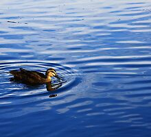 Duckie by Luke and Katie Thurlby