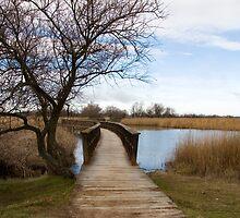 Tablas de Daimiel by emadrazo