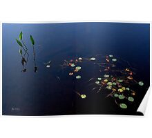 Pickerel Weeds and Lillies Poster