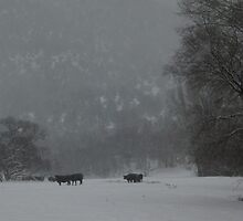 Winter Ranch by marlise