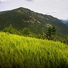 Ferns Atop Mt Willard by Wayne King