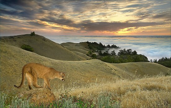 1177-Misty Cougar Sunset by George W Banks