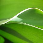 Green Wave by MsPeggyAnn