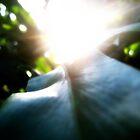 Leaf. by PeterBatten