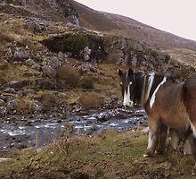 Horse Taking Refreshments Gap of Dunloe Co. Kerry!! by James Cronin