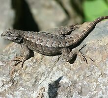 Fence Lizard by SKNickel