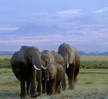 Elephants of Kili by Nancy Barrett
