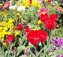 Splendid bright flowers by daffodil