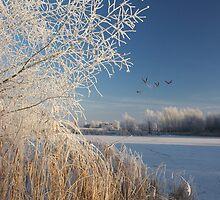Frosty & Clear by Coenraad Heijdemann