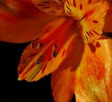 Early Delicate Light by Deborah  Benoit